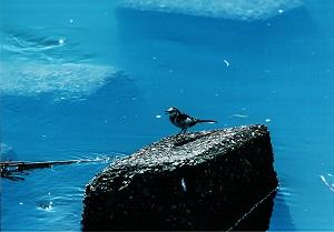 水は生命の源だヨ!