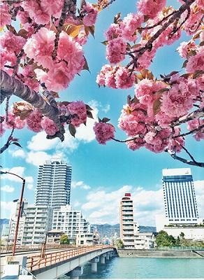 八重桜の咲くころに