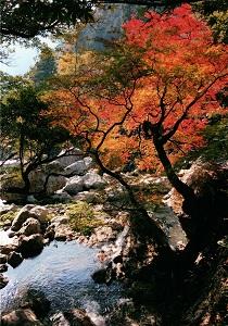 鏡吉原の秋