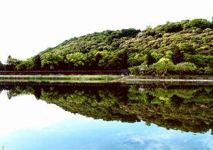 新緑の鏡川