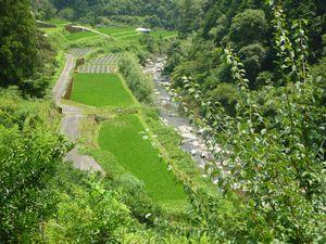 鏡川と河畔林と棚田