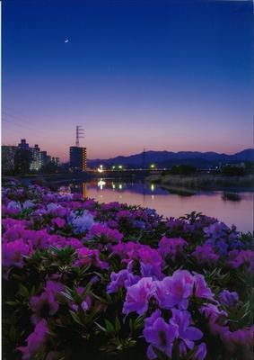 花咲く夕月