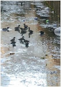 ポイ捨てと鳥の数