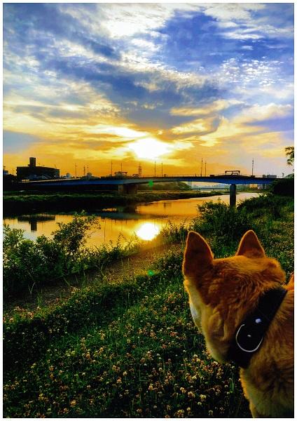 犬も見惚れる鏡川